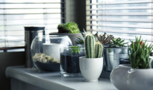 Read more about the article Vase Plant Gardening